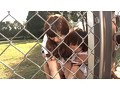 Chain Link Fence Rape Campus preview-1